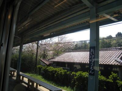 20090411waka05.jpg