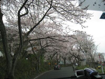 20100413_04.jpg