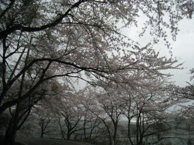 20100413_09.jpg